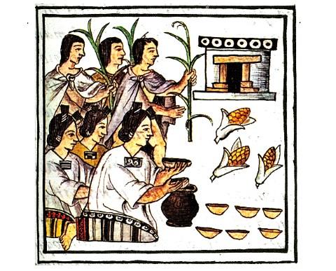 El maíz: su origen, historia y expansión - PanoramaCultural